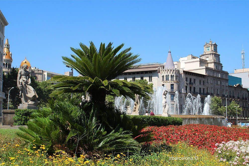 plantas y flores Plaza Catalunya
