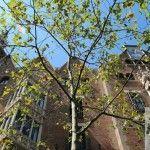 fachada av. Diagonal Casa Terrades