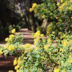 flores Parque del Laberinto
