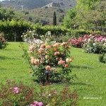 rosaleda parque Cervantes
