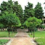 árboles en el claustro del Monasterio de Pedralbes