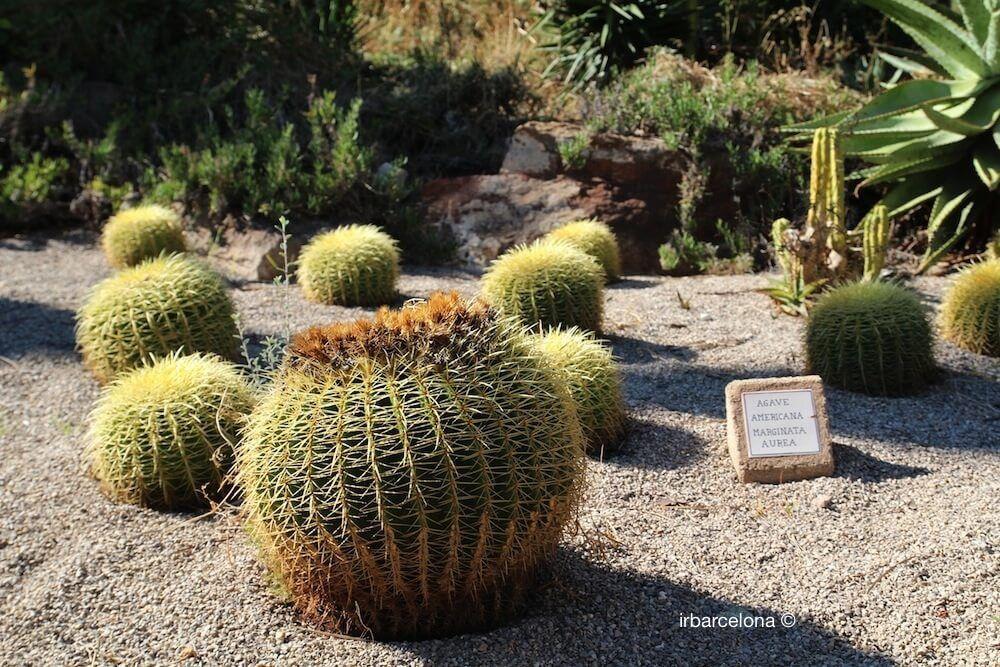 cactus jardines mossn costa i llobera