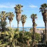 palmeras jardines Mossèn Costa i Llobera