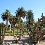 vegetación jardines Mossèn Costa i Llobera