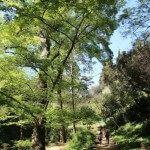 árboles jardín botánico histórico