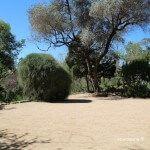 explanada jardín botánico histórico