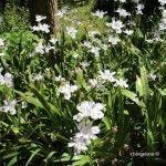 flores jardín botánico histórico