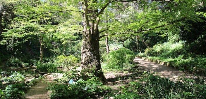 Barcelona's Historic Botanical Garden
