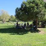 Picnic bajo un árbol
