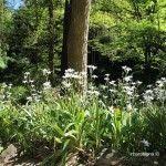 plantas jardín botánico histórico