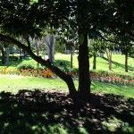árbol y su sombra