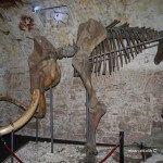 esqueleto mamut