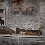 restos de mamuts