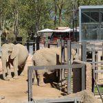 elefantes Zoo Barcelona