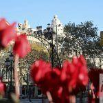 flores Passeig de Gràcia