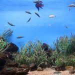 peces Aquarium Barcelona