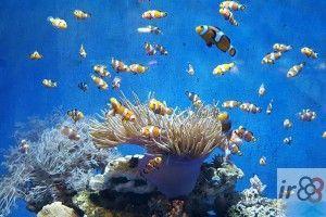 Eintrittskarten Aquarium Barcelona