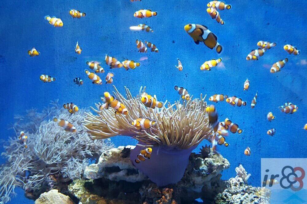 Aquarium Barcelona