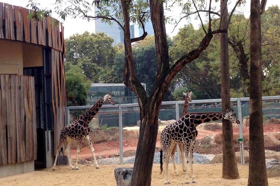 compra entradas Zoo Barcelona