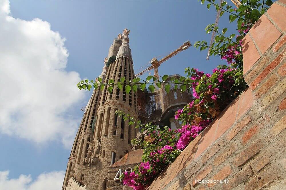fiori accanto alla Sagrada Familia