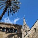 palmera y Catedral Barcelona