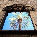 reflejo palmera