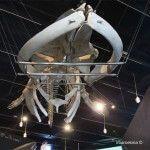 ballena del Museu Blau