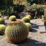 cactus jardines Mossèn Costa i Llobera