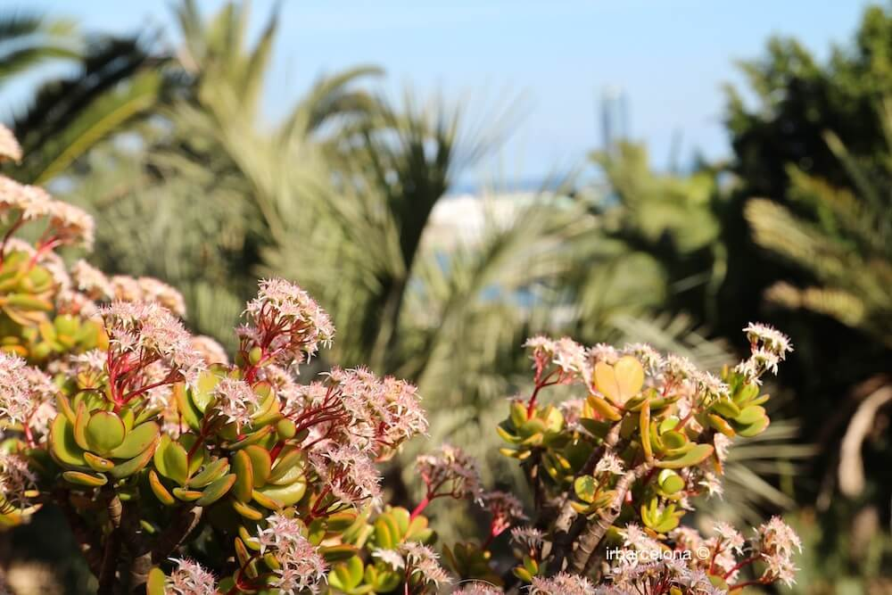 detalle jardines Mossèn Costa i Llobera
