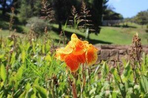 Gärten Mossèn Cinto Verdaguer