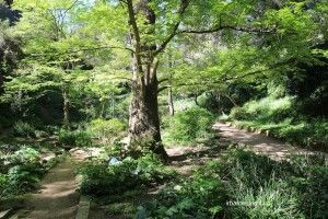 Historische botanische Garten Barcelona