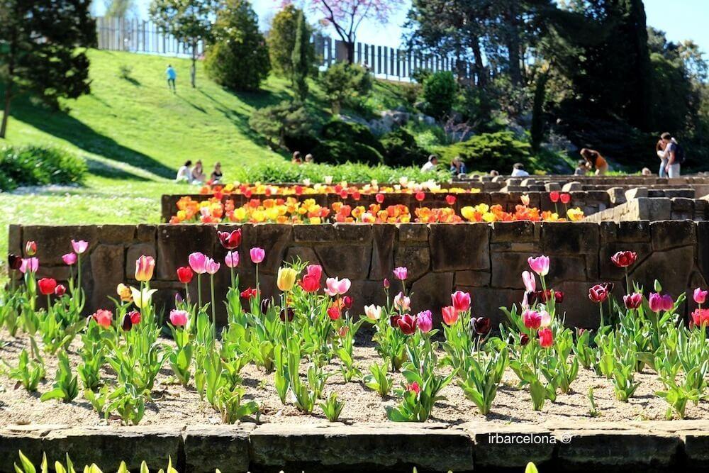tulips jardins Mossèn Cinto Verdaguer