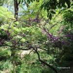 vegetación jardín botánico histórico