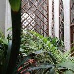 plantas atrio