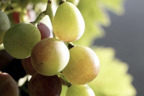 Visita vinícola a Can Bas