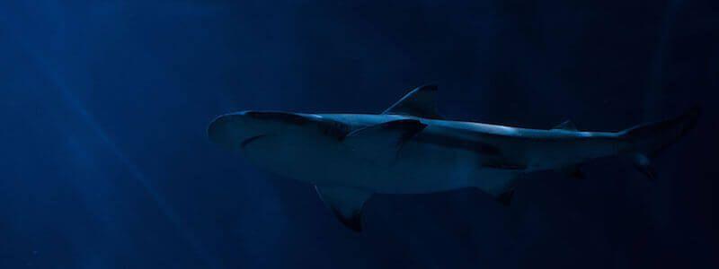 bucear entre tiburones Barcelona