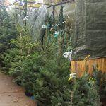 árboles Feria Navidad Sagrada Familia